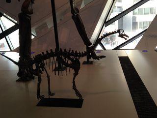 ROM Baby Sauropod