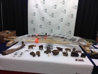 Mastodon Fossils