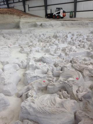 Rhino Fossils